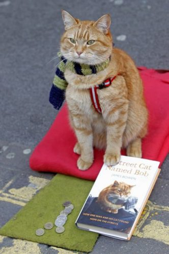 A Street Cat Named Bob (Un motan pe nume Bob)