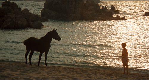 The Black Stallion (Armăsarul negru)