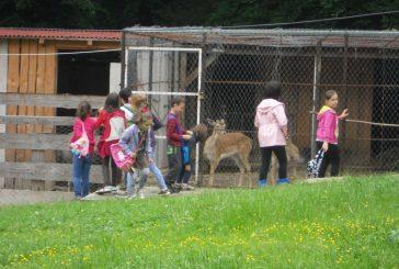 Parcul zoologic de la Mănăstirea Florești, o atracție pentru copiii din localitate