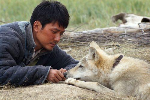 letzte-wolf-der-1-rcm0x1920u