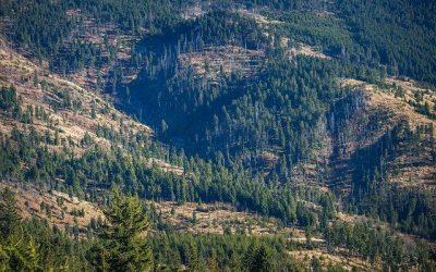 Peste 800 hectare de pădure vor fi regenerate în Maramureș